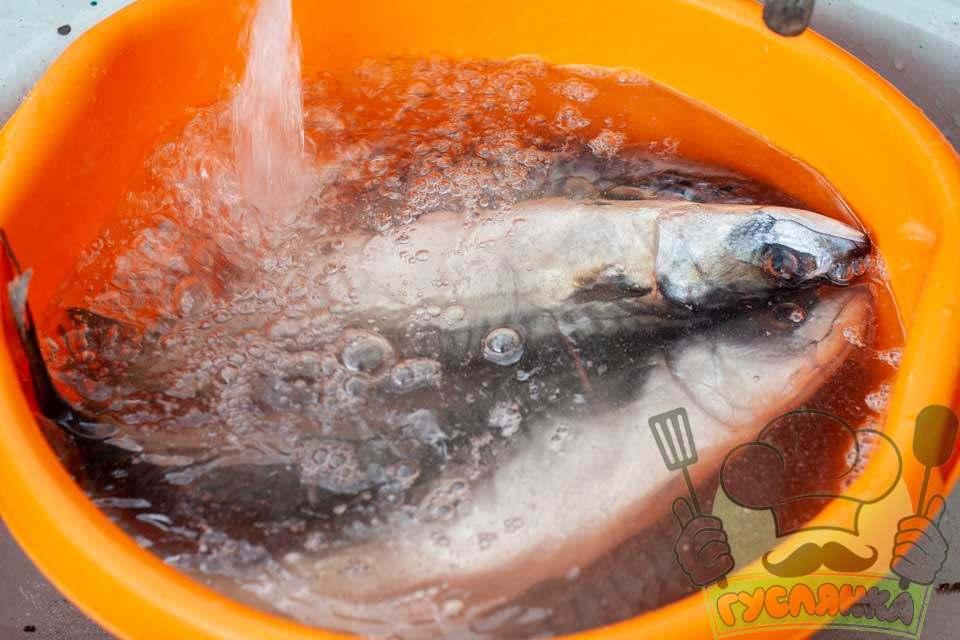 вранці я дістаю рибу з холодильника і знову її добре мию чистою водою
