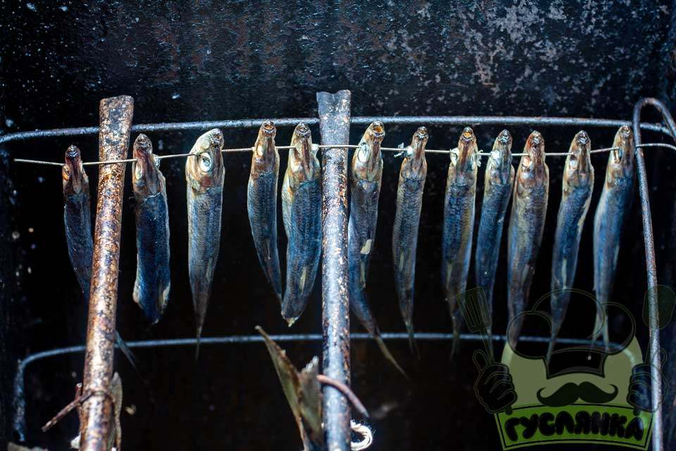 в розігріту коптильню відправляю рибу